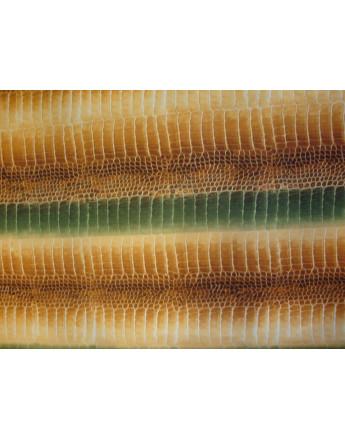 Tissu Peau Bête Cocodrilo